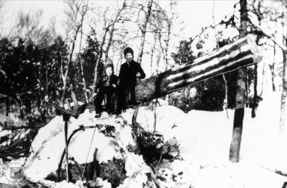 Tømmerhogst på Arsknutten, Hjemlestad Bjelland.