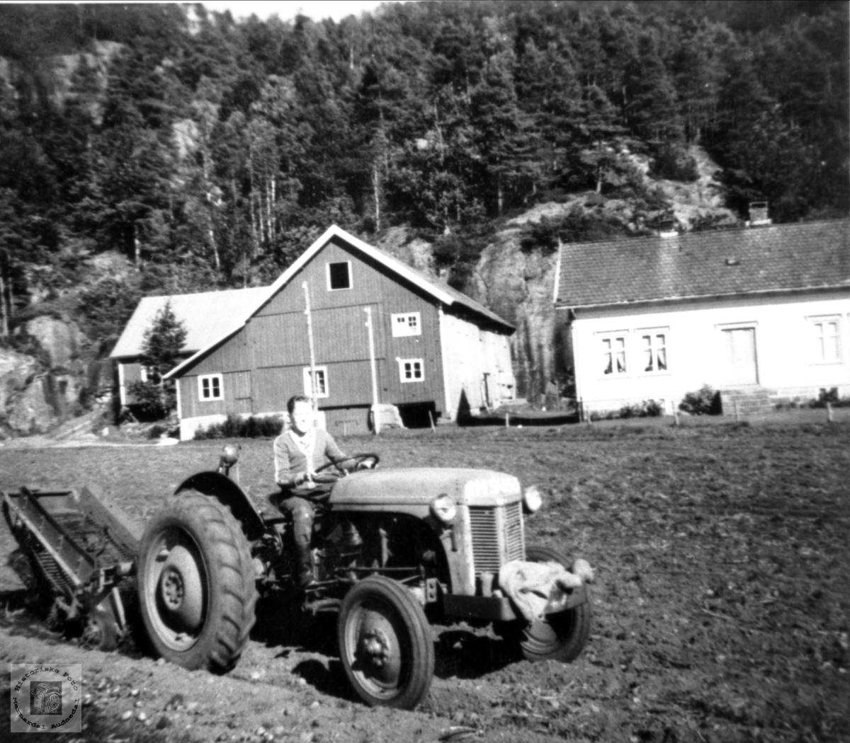 På traktor. Odd Aukland, Laudal.