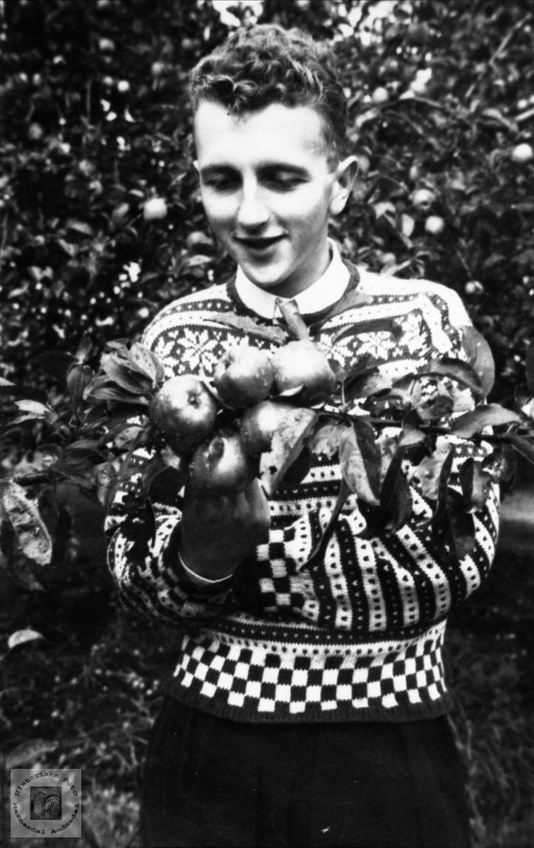 I eplehagen. Eivind Rosenvold, Laudal.