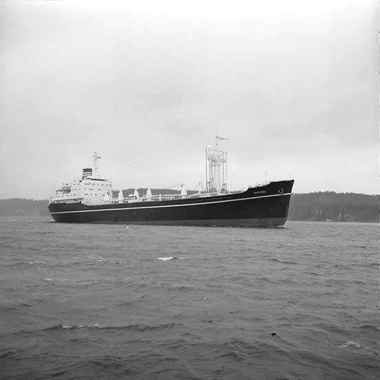 Fartyg nr. 277 M/S Taronga, lastfartyg.