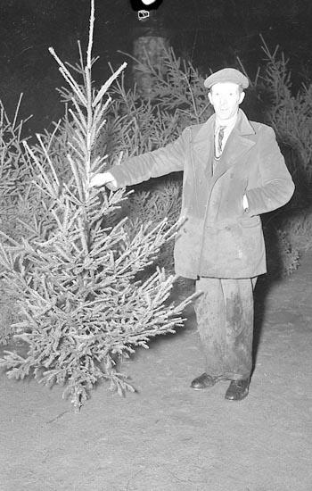 Julgransförsäljning, Uddevalla, i december 1949.