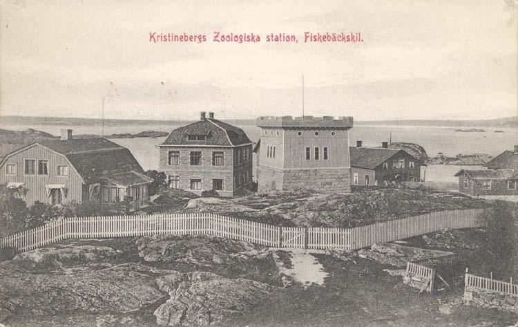 "Tryckt text på kortet: ""Kristinebergs Zoologiska station, Fiskebäckskil."""