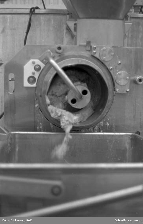 """Enligt fotografens noteringar: """"Här kommer den färdigmalda fisken ut, färdig att blandas med ingredienser."""" Fototid: 1995 den 16, 24 november och 11 december."""