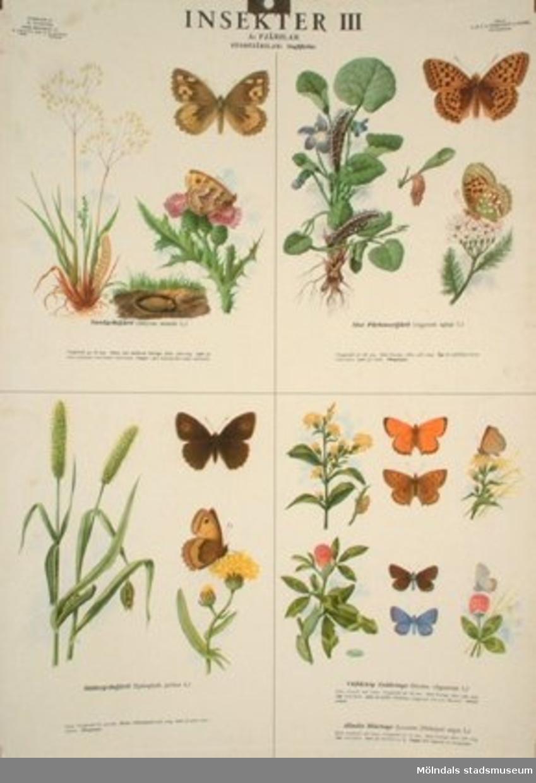 Biologi.Insekter 3. Fjärilar, storfjärilar.Utarbetade: M. Richter.