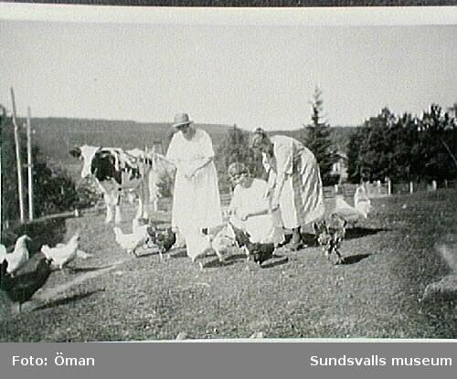Kvinnor matar hönsen vid Furunäs, Sidsjö