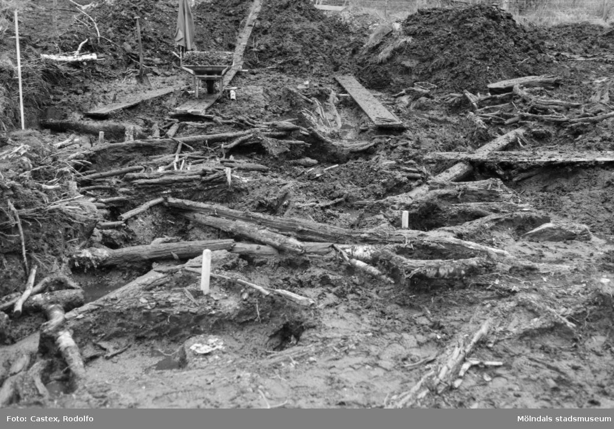 Arkeologisk utgrävning i Tulebo mosse, augusti 1993.