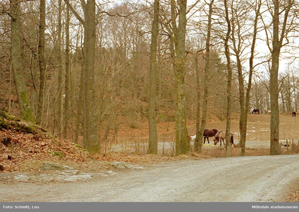 Några hästar som går på olika ställen i en hage tillhörande Gunnebo slott. Runt omkring hagen finns träd.