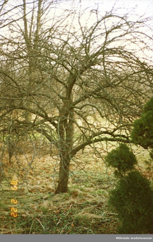 Ett avlövat träd i skogen.