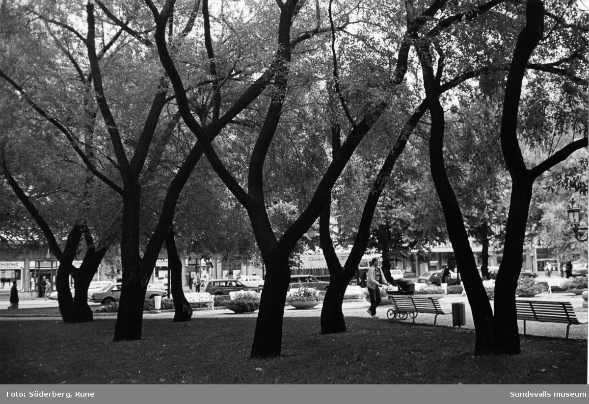 Pilarna vid Vängåvan. Delvis av träden togs bort 2002-2003 vid renoveringen av parken.