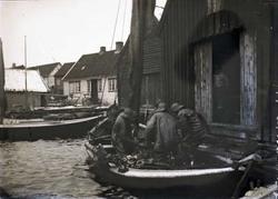 Båt med sildelast losses inn i Lars Ydstebøs sjøhus på Ydste