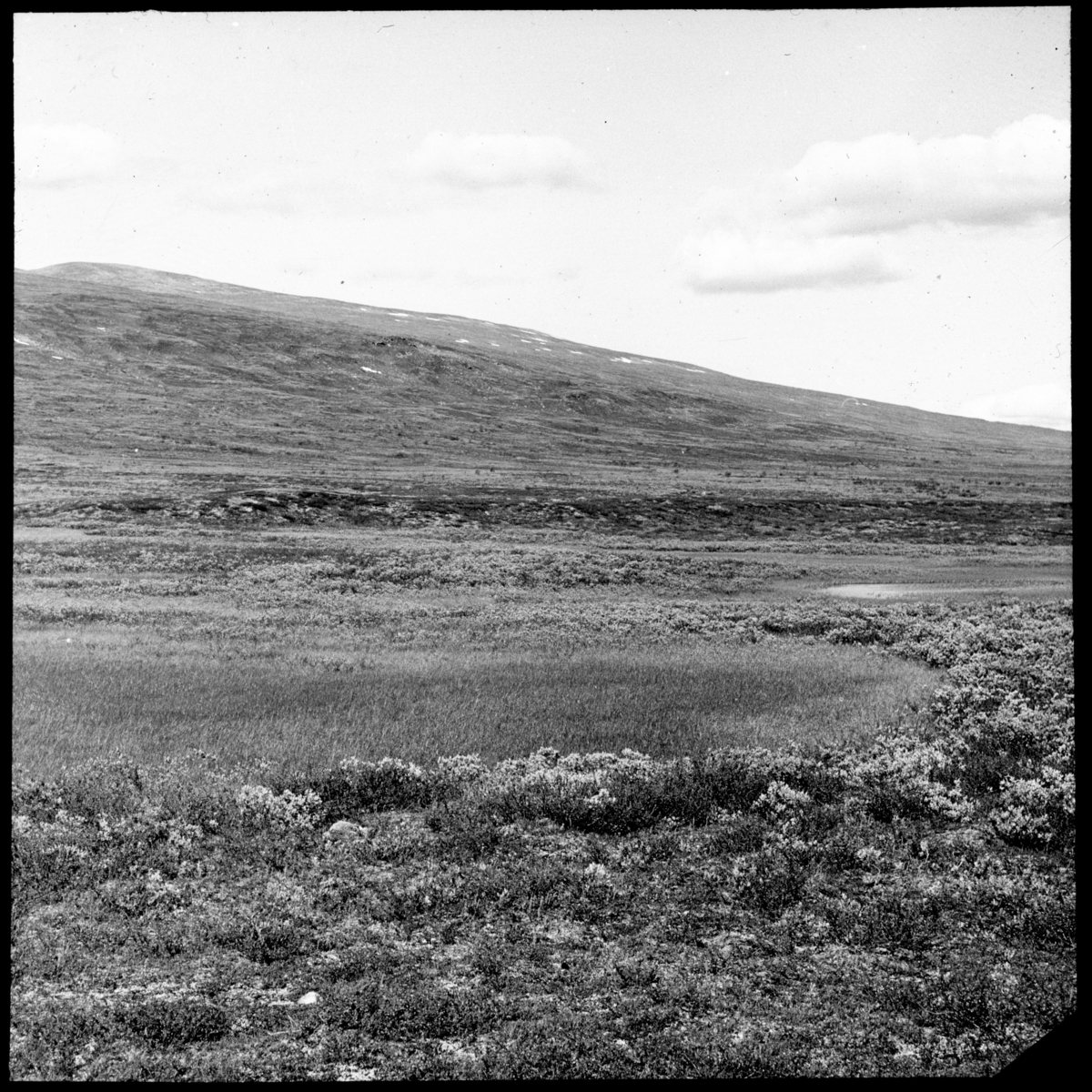 'Bildtext: ''Häckningsterräng för kärrsnäppa och myrsnäppa norr om Tjålmejaure.'' Vy med våtmark, kärr och gräs- och risvegetation nedanför sluttning. ::  :: Ingår i serie med fotonr. 5163:1-7 numrerade med bildnr 201-207.'