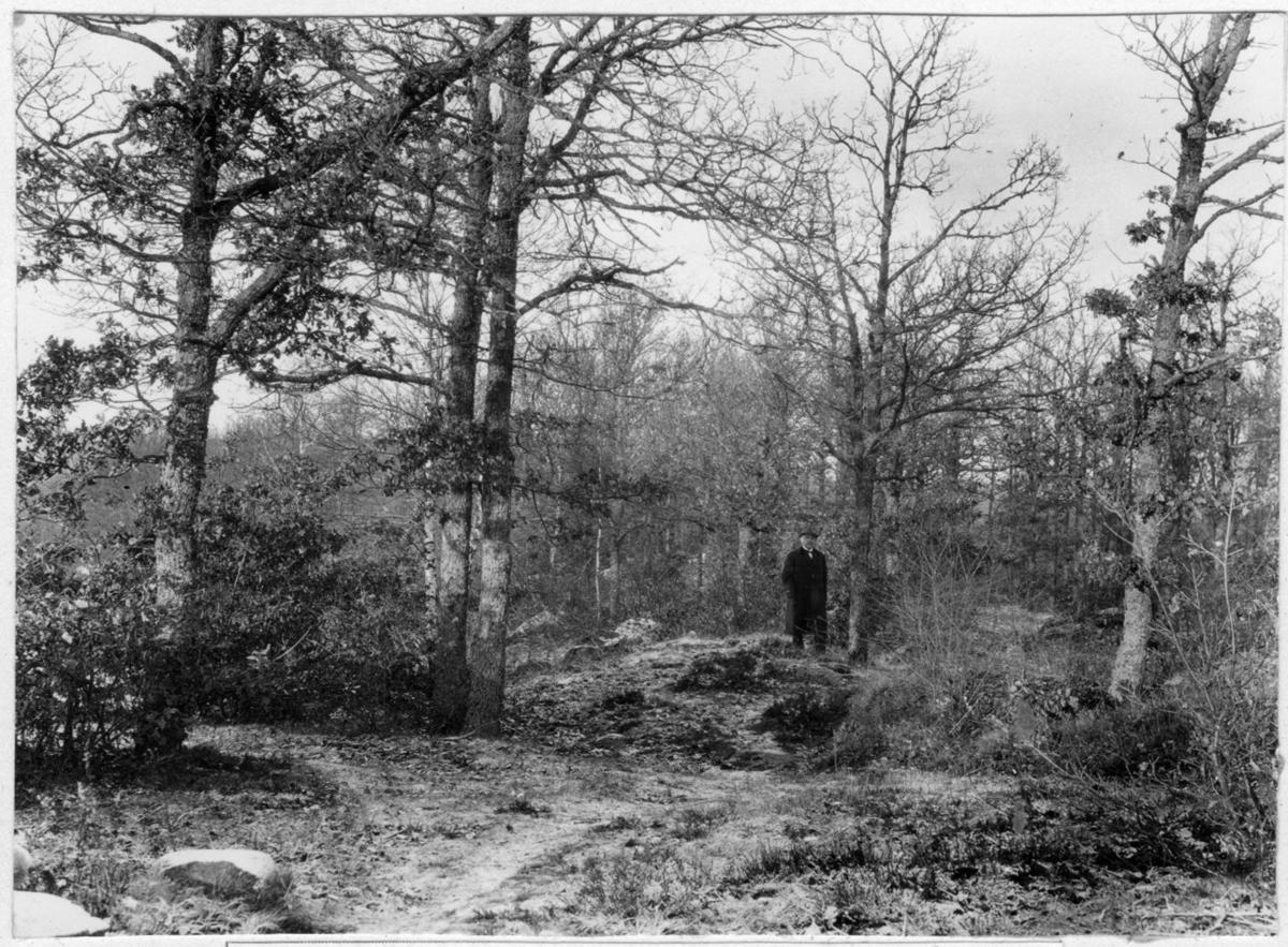 'Bildtext: ''Gammaldags hagmark, vanskött, dålig skog och mindervärdigt bete.'' Vy med 1 man stående vid lövträd. Lövträdsvegetation och viss buskvegetation. ::  :: Fotonr. 7048:1-26 indelad under rubriken ''Däggdjur, Människor''. Ingår i serie med fotonr. 7046:1-383, 7047:1-33 och 7048:1-67 med bilder från  Länsjägmästare John Lindners bildarkiv.'