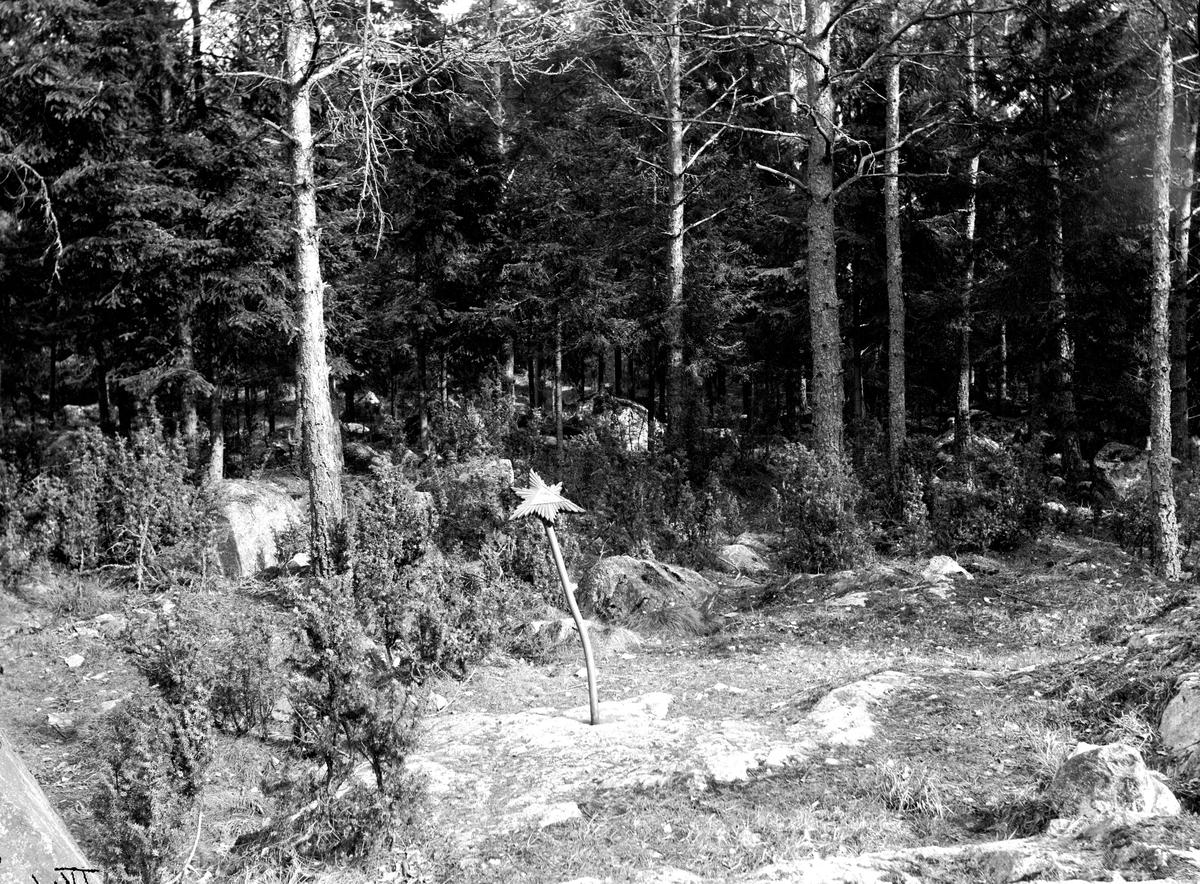 """""""Guds öga"""" i Karlbergsskogen. Fotograf E Sörman."""