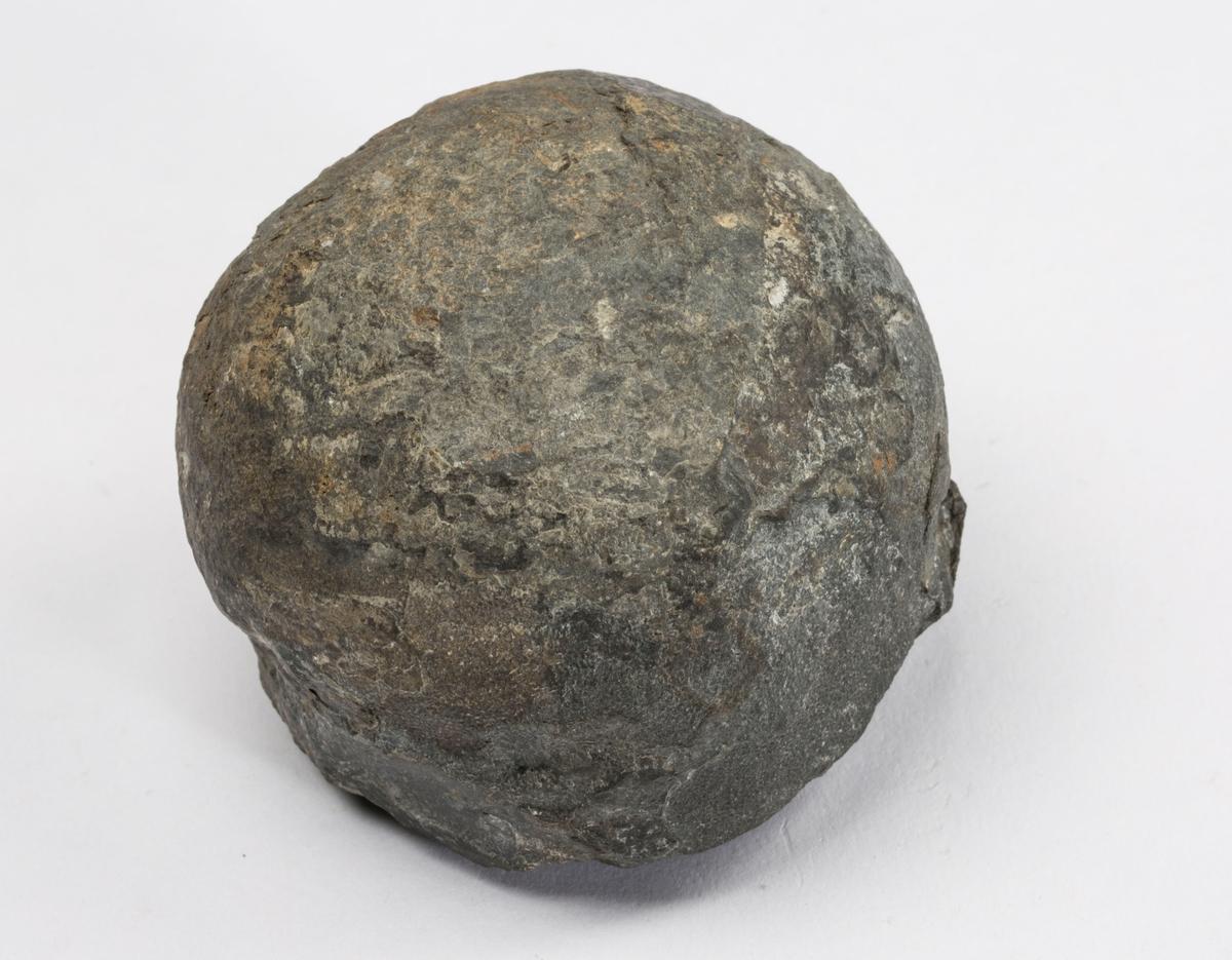 Fossil ORDOVICIUM, BRYOZO