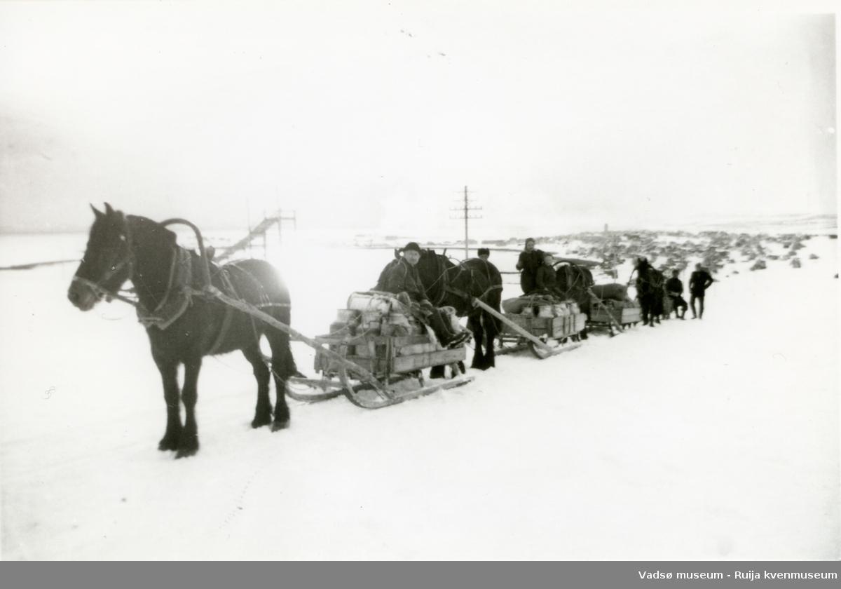 Hestekaravan på vinterstid. Her på retur til Skallelv etter å ha levert melk til meieriet i Vadsø. Arnulf Bauna fremst, ca 1955.