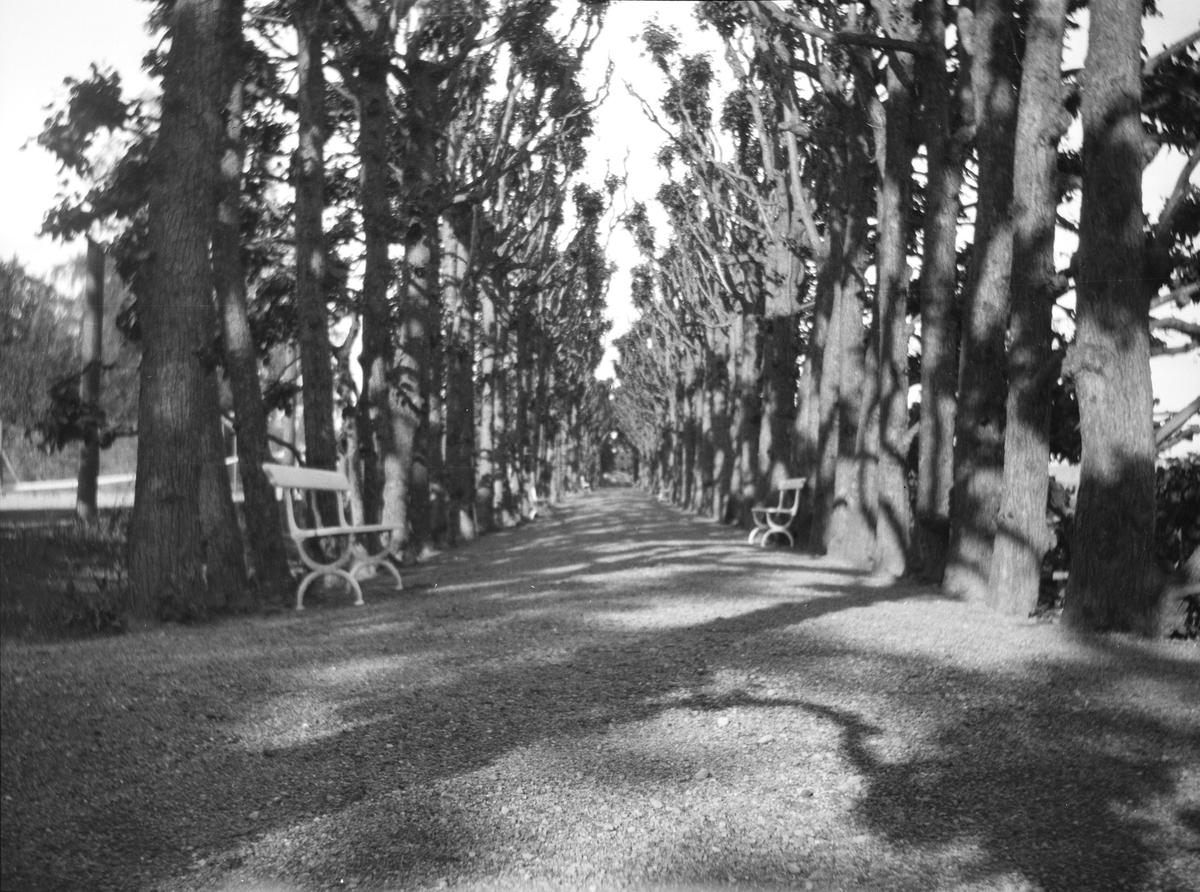 På Linderud Gård har de flere alléer. Dette er sannsynligvis Lindehallen. Der er trærne klippet slik at løvverket om sommeren lager et tak over veien. Så kunne man spasere i skyggen selv om solen skinte. Antakelig er bildet tatt sen vår/tidlig sommer.