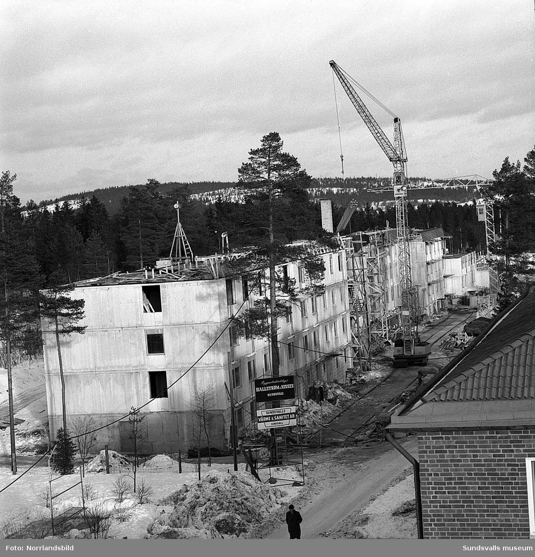 Byggnation av flerfamiljslängor vid Tallrotsgatan.