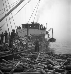 Den finska skutan Tärnö från Kaskö stötte på grund utanför S