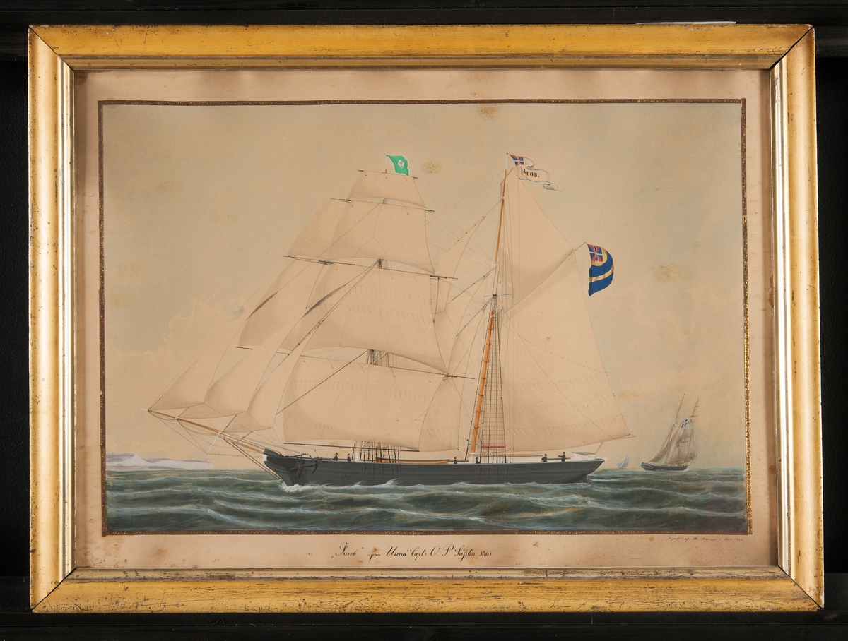 Skonare till sjöss under alla segel, visande babords, läsida. Fartyget har svensk unionsflagg, namnvimpel och neptuniflagg.