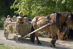 Hest_og_kjerre.jpg