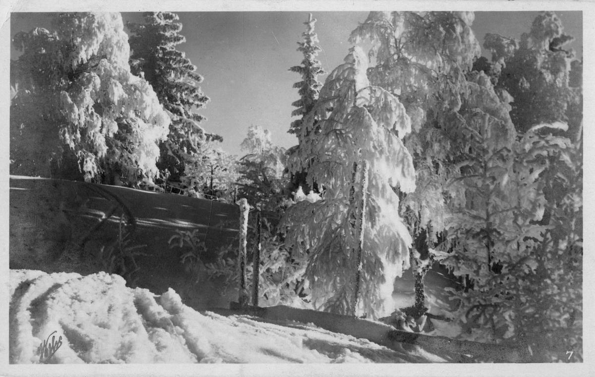 Postkort. Vinterlandskap med skog og snø.
