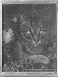 Porträtt av katt med ödla.
