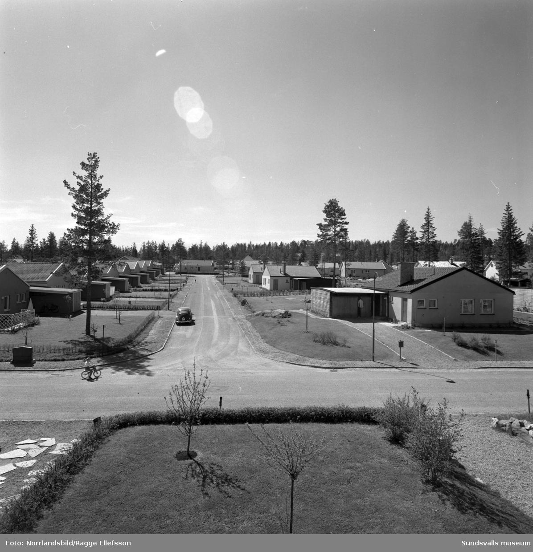 Villaområde i Haga, ovanför Hagaskolan. Bilderna är från husen kring korsningen Svedjegatan och Älgstigen.