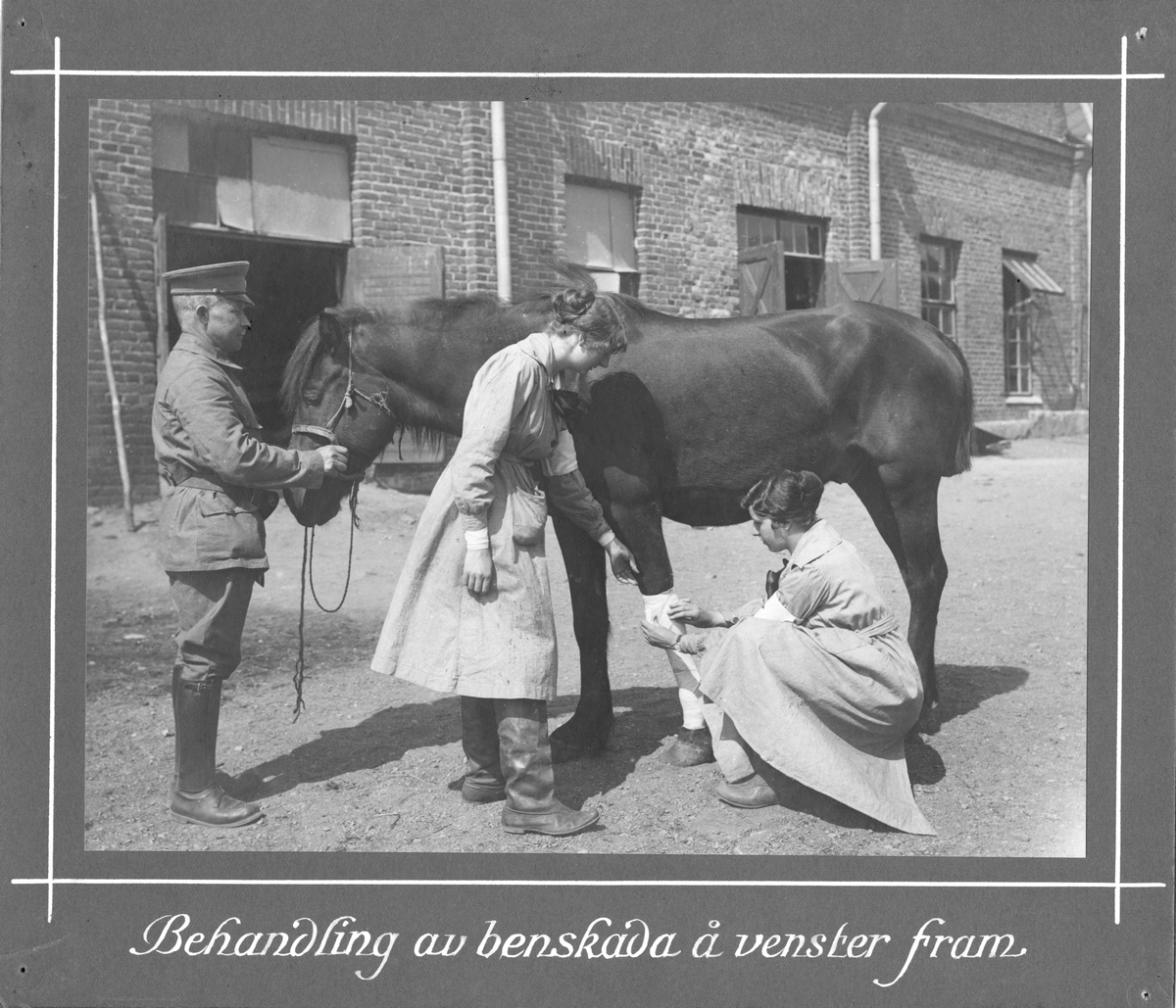Behandling av benskada på vänster framben Svenska Röda Stjärnans veterinärambulans i Finland 1918.