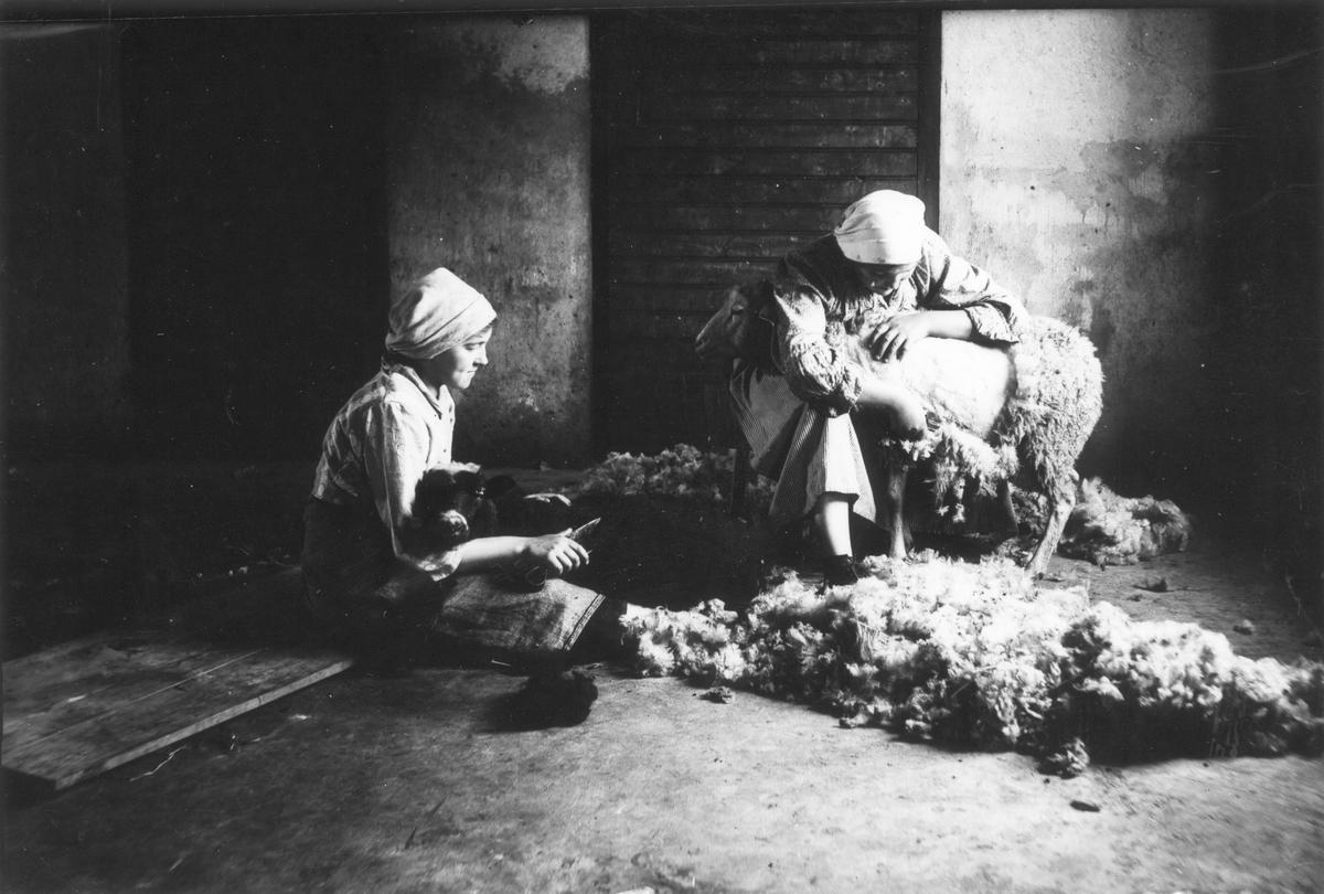 Pigorna Beda Lundgren och Agnes Andersson klipper fåren i Nils-Nils. Foto 1917-1918.