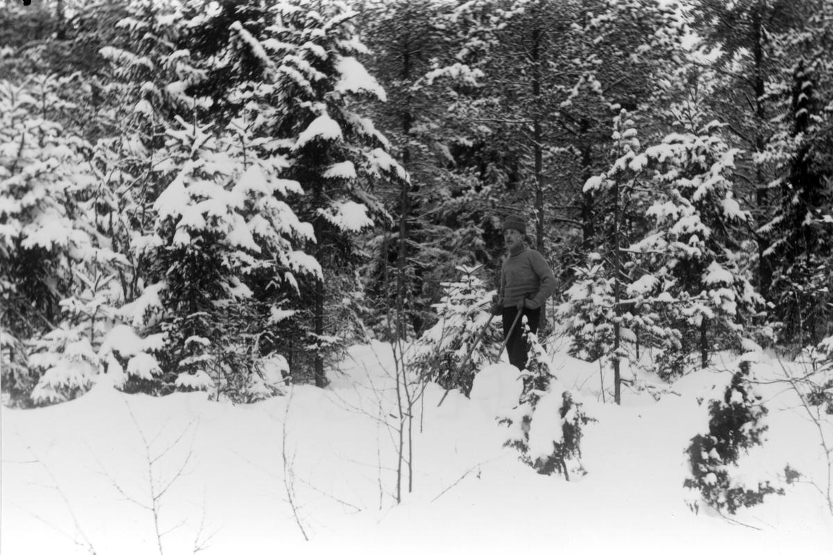 Okänd Lenningebo på skidtur på 1910-talet.