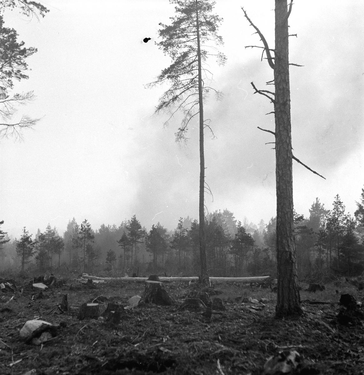 Brand i Forsbacka. Maj 1949.