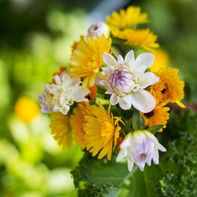 blomster_gartneriet_liten.jpg