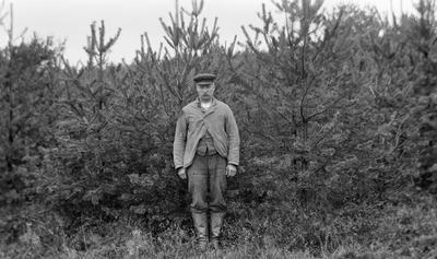 Tolv år gammelt furubestand. En mann med bart, skjermlue og jakke står foran bestandet. Skogplanting. (Foto/Photo)