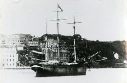Bark 'Petrellen' (b.1849, Medford, Mass. USA).