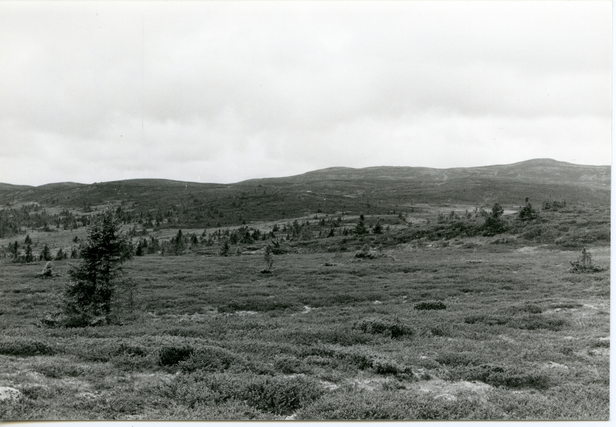 Høvreslia, Sør-Aurdal.