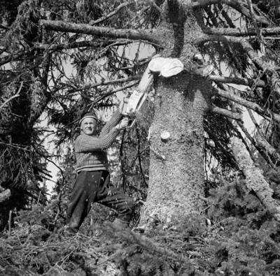Foto_av_Tor_Inderberg_Norsk_skogmuseum_Norsk_institutt_for_skogforskning.png. Foto/Photo