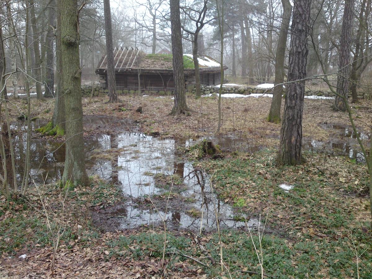 Vattendränkt skogsparti bakom Hornborgastugan.