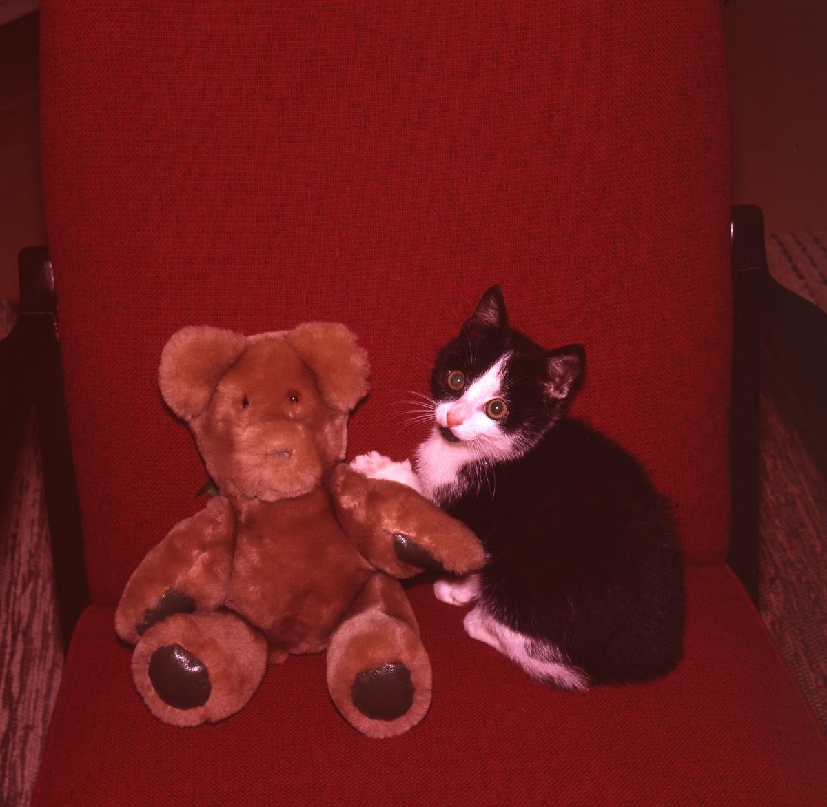 En teddybjörn och en kattunge sitter tillsammans i en stol.