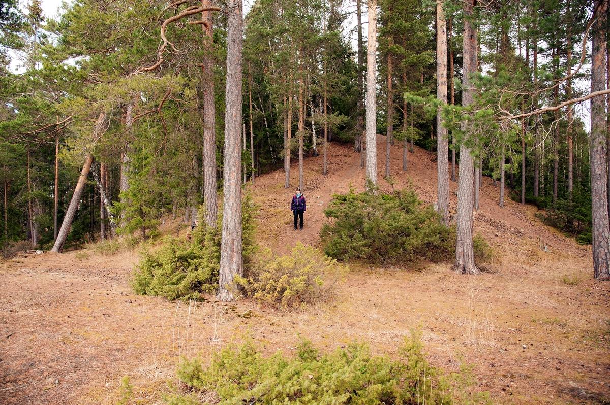 Hovinsholmen, Helgøya, Hedmark. Her ser en tydelig dimensjonen på gravhaugen. Er nok ingen hvemsomhelst som er gravlagt her.