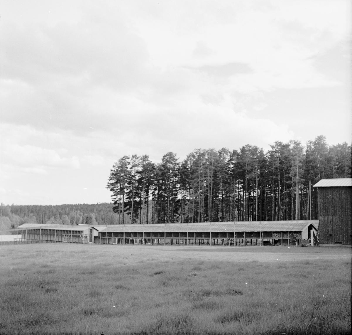 Strömhedens pälsgården, Berg. Landafors