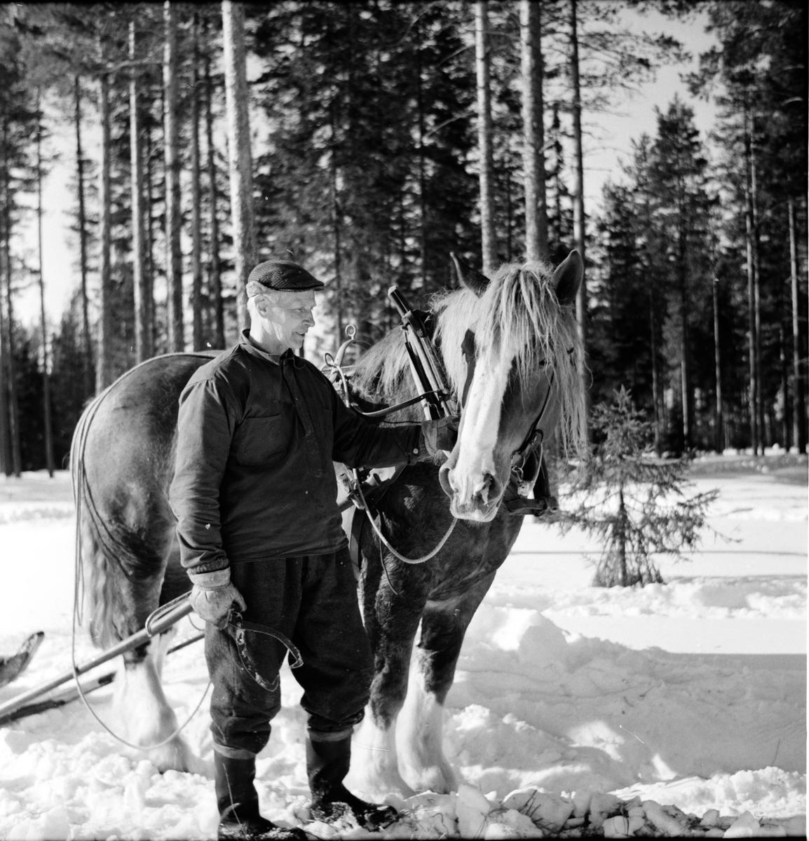 Arbrå, Hästen behövs i skogen, Bosjön, Mars 1969