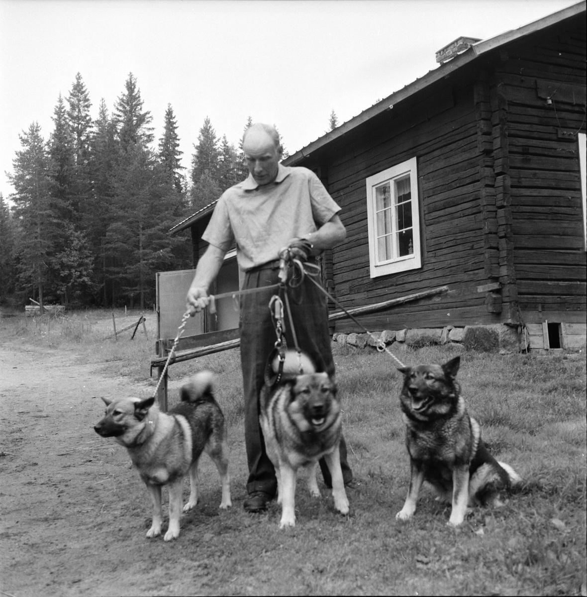 Änga, Olle o Johan Storm, 11 Juli 1961