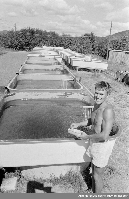 Sørkedalen. 243.000 ørretyngel skal settes i Nordmarka-vann. Bestyrer Sigbjørn Andersen foran fiskekarene i Sørkedalen. Juli 1966