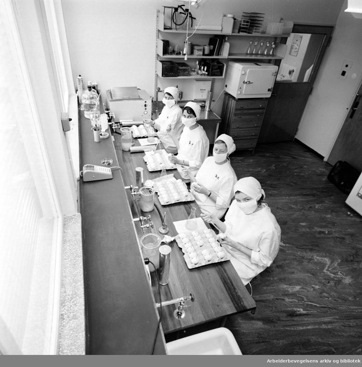 Statens Institutt for Folkehelse. Influensalaboratoriet. Februar 1962