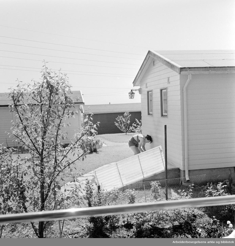 Solvang Hagekoloni. Juni 1963