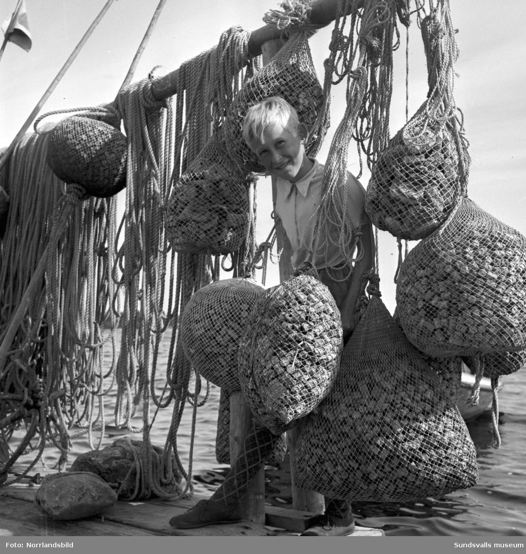 Barn på en fiskebrygga någonstans på Alnö. På bryggan hänger diverse rep och flytdon av kork.