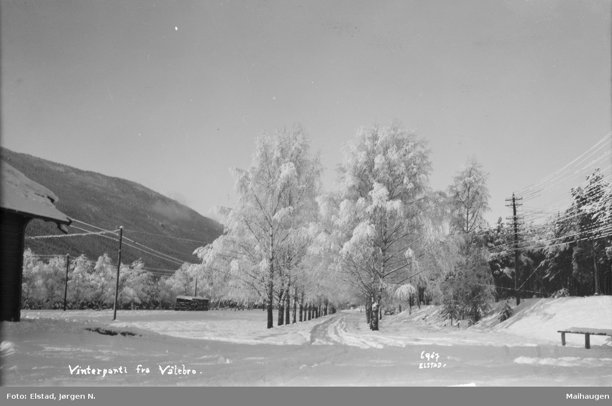 Ringebu. Vintermotiv fra Vålebro med bjørkeallé.