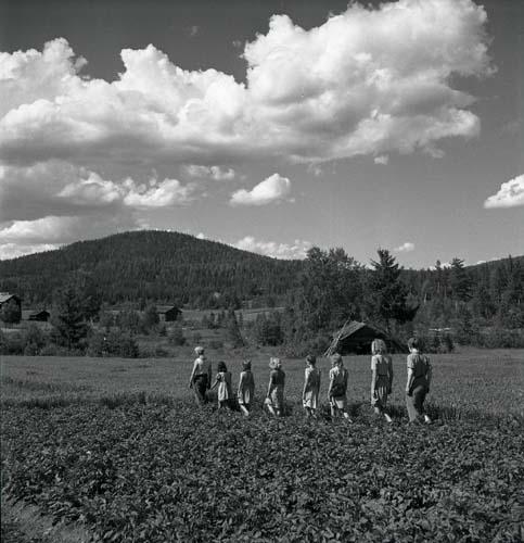En grupp ungdomar går på rad i ett potatisland. Unga Odlare 1948 -1949.