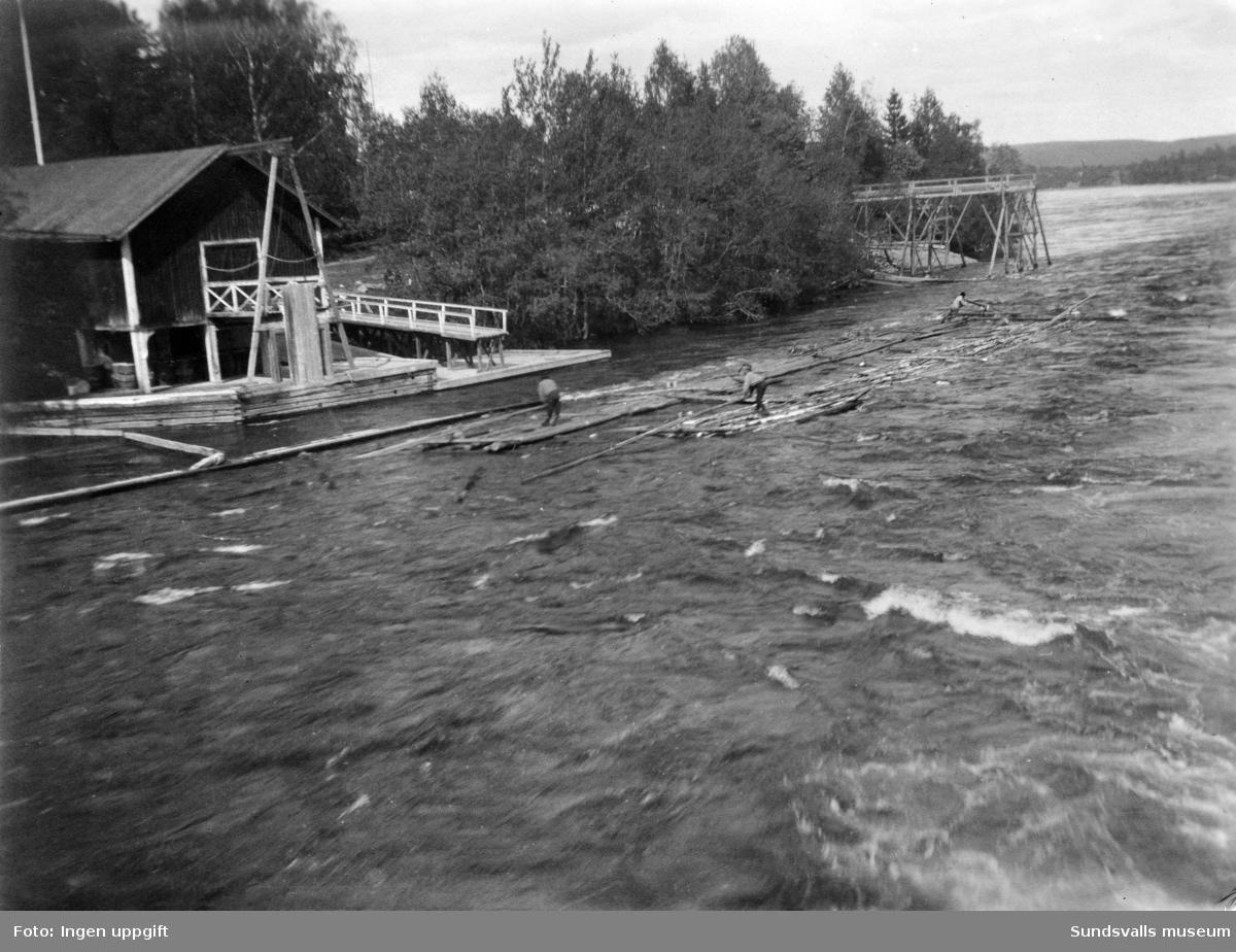 Tre män manövrerar en storflotte i forsen på Indalsälven vid Bergeforsen.