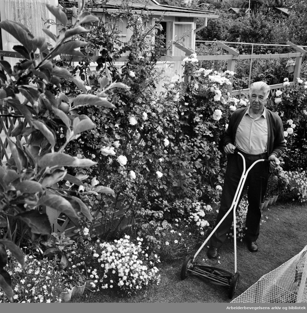 Rodeløkka Kolonihage. Kasserer Kristinus Fosse klipper plenen i sin vakre hage. Juli 1967